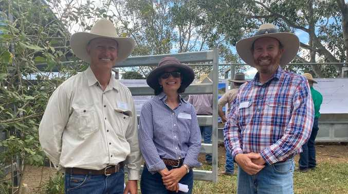 CQ steer study: How diet change beefed up cattle by 59kg
