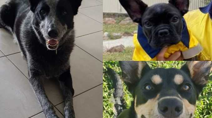 Who won? Gympie's most loveable dog comp down to the wire