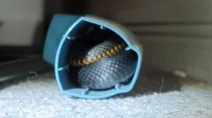 'Most incredible': Venomous snake found in teen's inhaler