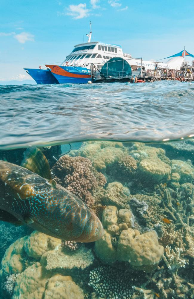 The Great Barrier Reef tourism industry could benefit from a plan to encourage more schoolchildren to visit on excursions. Picture: Tourism Tropical North Queensland.