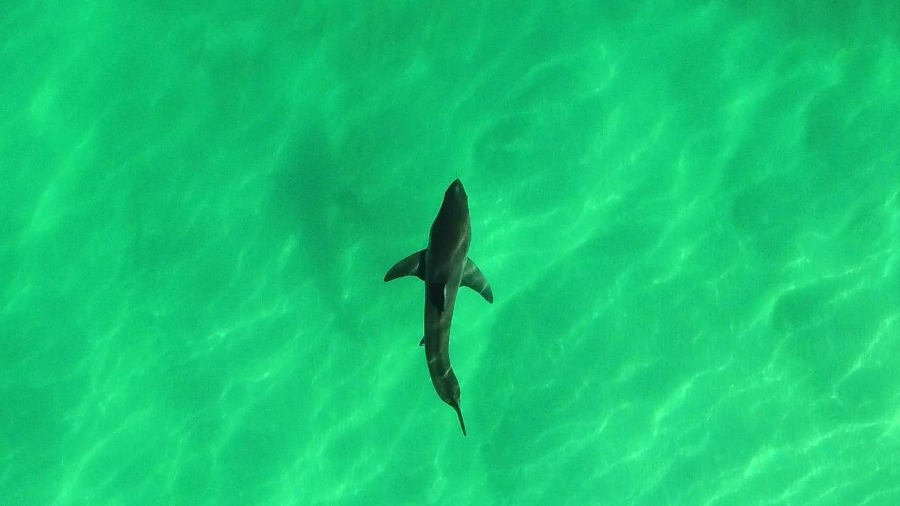 Drones are now a critical tool in identifying shark risks on North Coast beaches.