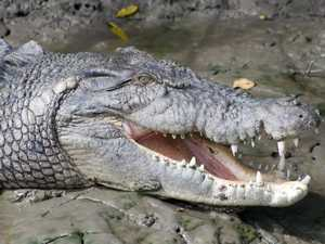 WATCH YOURSELF: Rangers close in on crocs