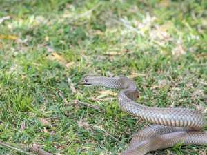 Man flown to hospital after suspected snake bite