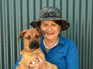 Shock number of pets impounded or surrendered to council
