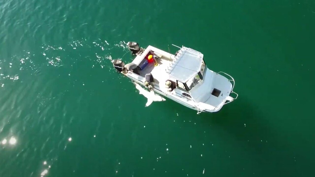 Drones and SMART drumlines have been used in the state government's shark management strategy.