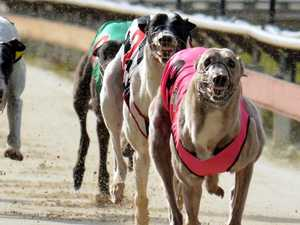 New greyhound track on North Coast attracts opposition