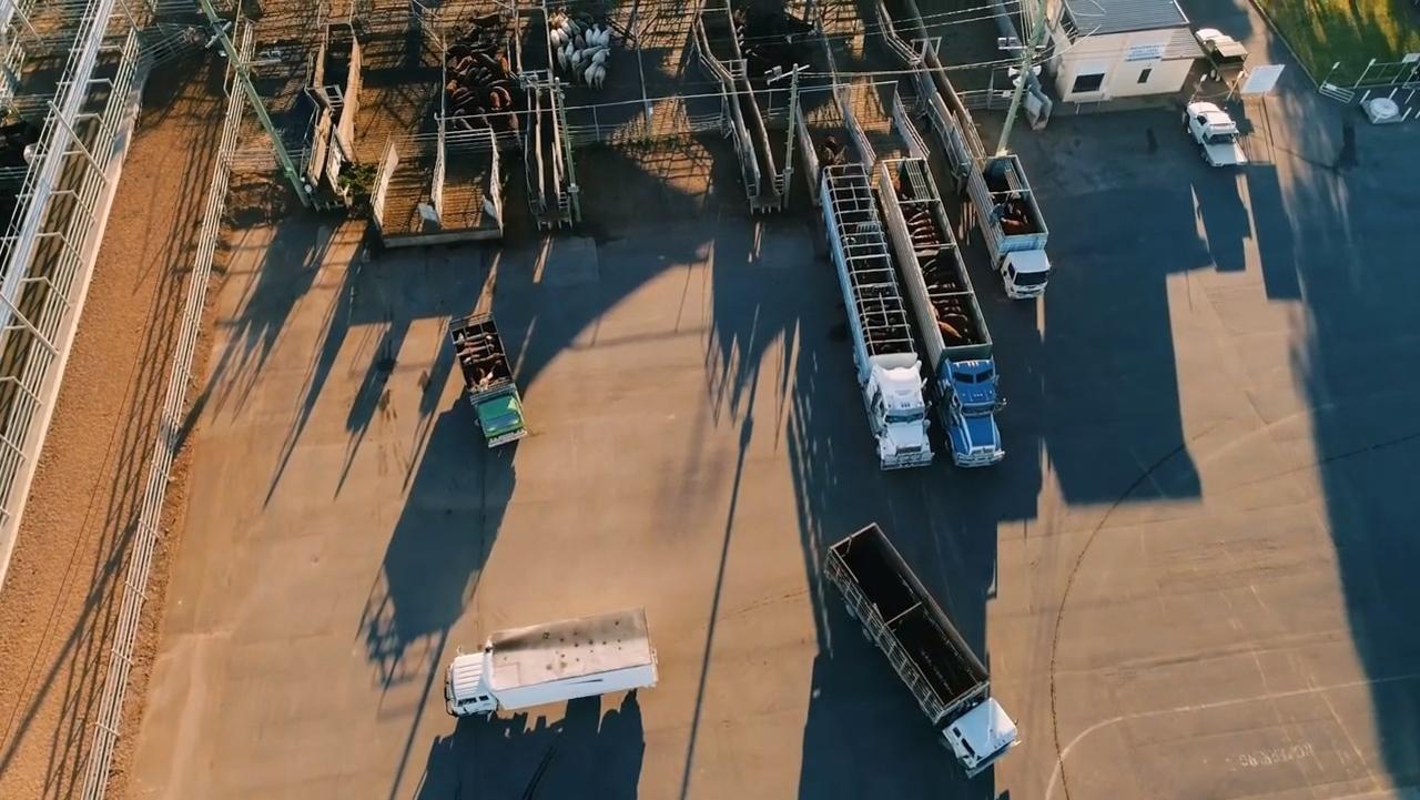 Livestock Transport at the Saleyards. Photo Credit: Meat & Livestock Australia.