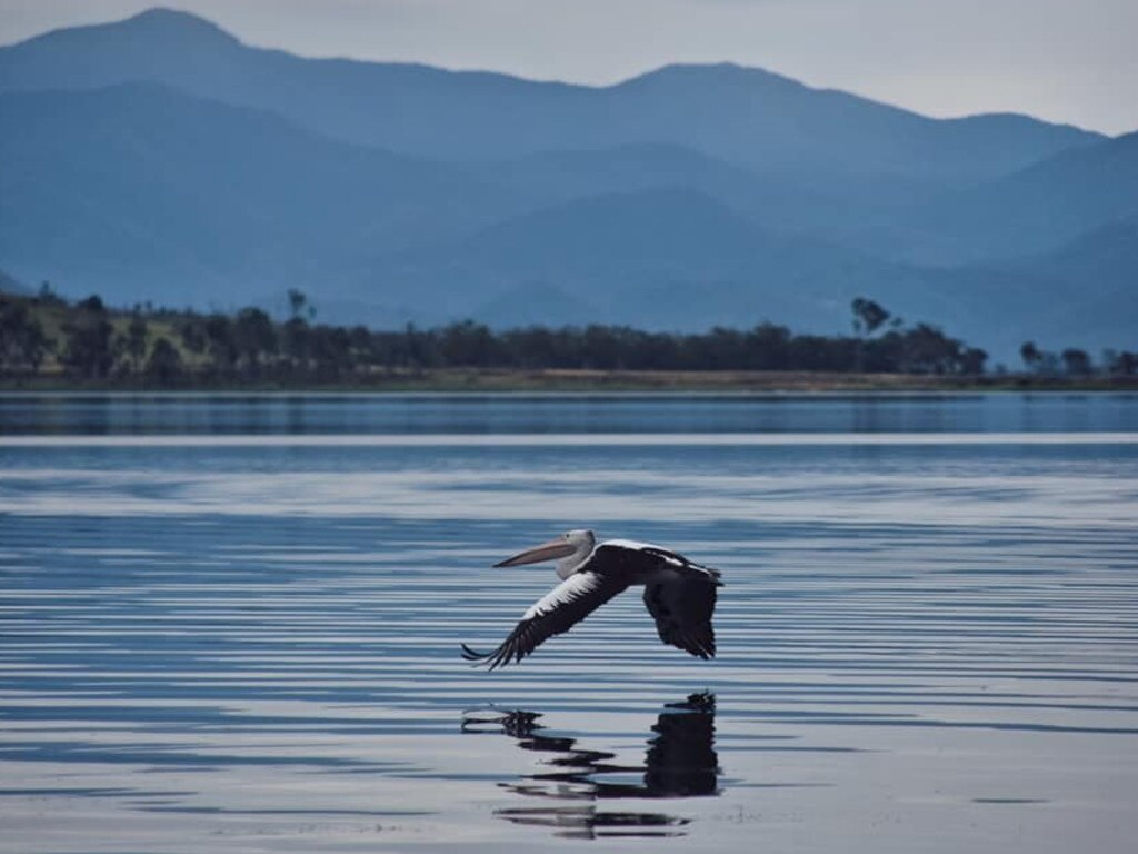 A pelican flying over Kinchant Dam, west of Mackay. Picture: File