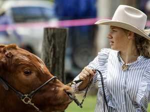 63rd Proston Show Stud Cattle