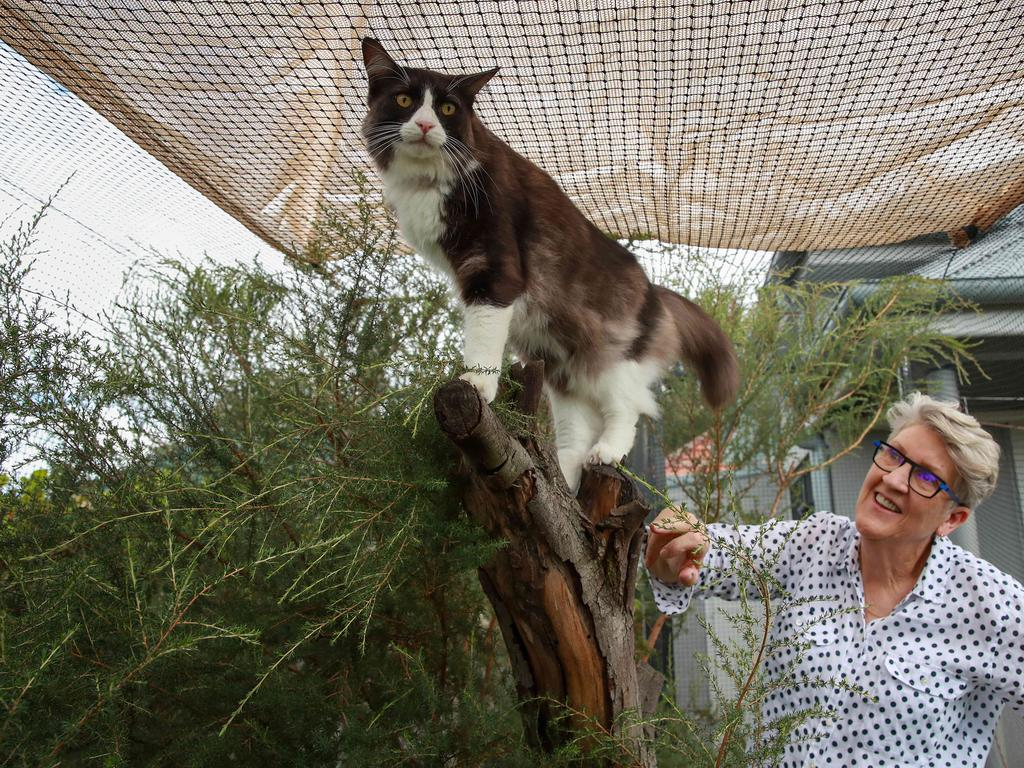 Mary Balch with Rupert in her cat enclosure at home in Marrickville. Picture: Justin Lloyd