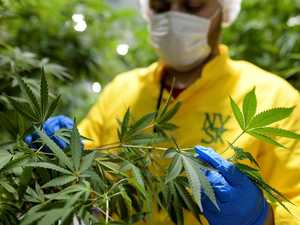 CSIRO developing over-the-counter medicinal cannabis