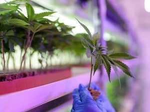 Boom city will be home to mega cannabis farm