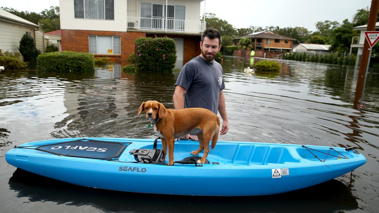 Dave Soury's dog Scout kept dry at North Haven, south of Port Macquarie. Picture: Nathan Edwards