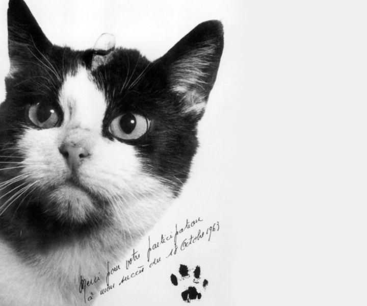 A tribute to cats who lived amazing nine lives