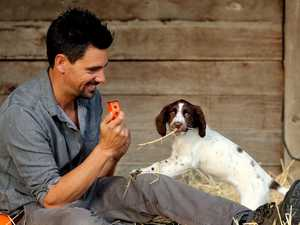 Dog training mistakes we should all avoid