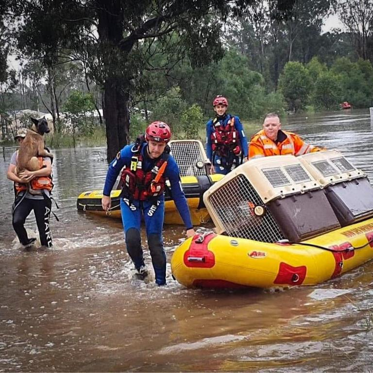 Penrith SES volunteers are seen rescuing these animals from the floods. Picture: Penrith SES
