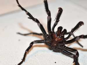 'Perfect storm': Floods spark deadly spider warning