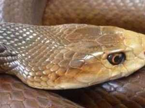 Pets and snakes: bite symptoms can be confusing