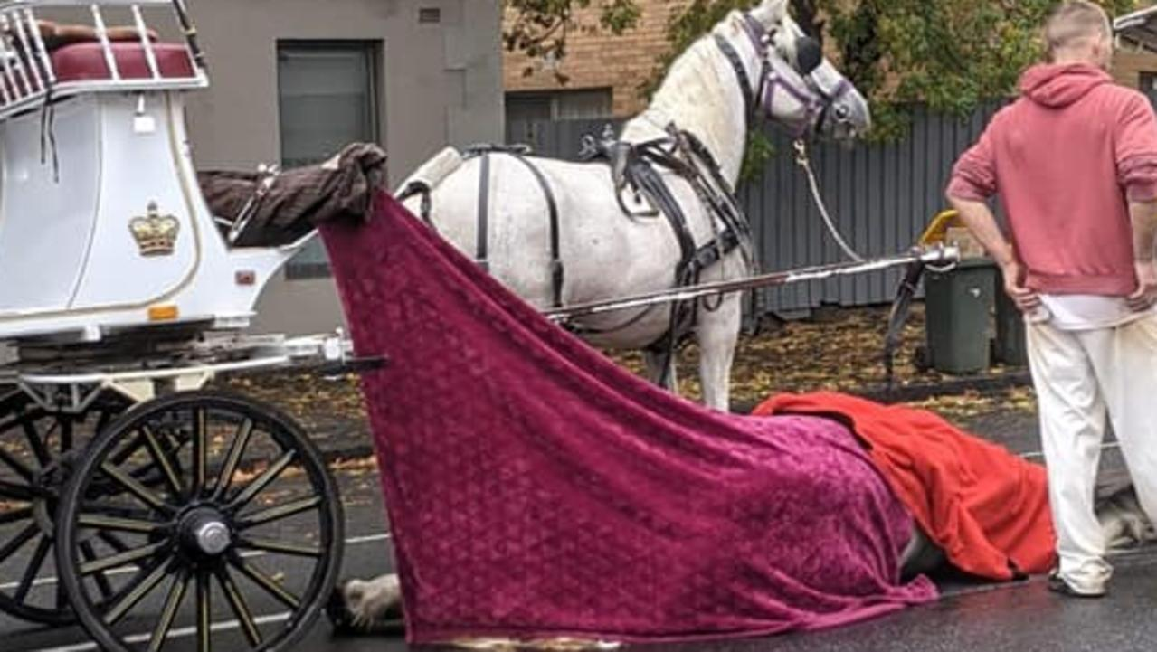Photos show dead carriage horse covered in blanket on street in North Melbourne