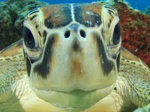 Judge's ruling over Mackay turtle kill case