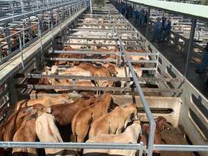 Northern producers make the most of cattle sale