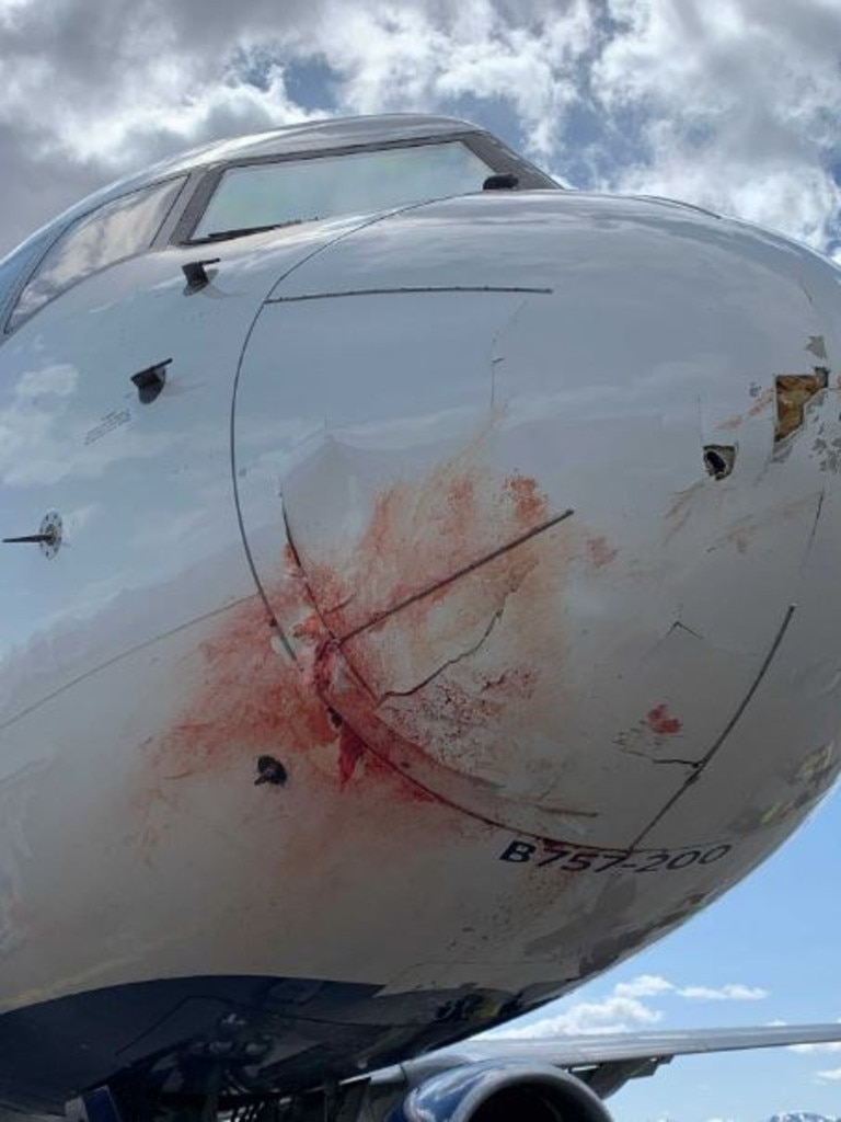 The plane struck a flock of birds.