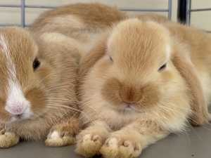 'Can't understand why': Rabbit rescue struggling to rehome