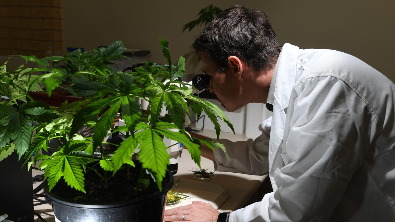 Associate Professor Bronwyn Barkla, Director of the University's Southern Cross Plant science, and Associate Professor Tobias Kretzschmar will help to underpin pioneering research into the medicinal cannabis industry in NSW