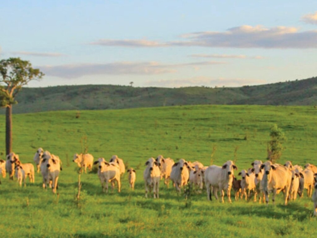 'Eulogie' Dululu, owners Matthew and Janelle McCamley will welcome guests who will gain an insight into the workings of a world class Brahman Stud business, exploring both its success and need to navigate seasonal adversity and the role of business diversification.