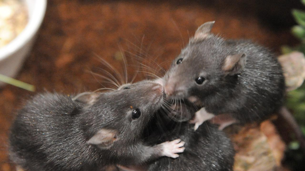 Residents are being warned about rodent infestations.