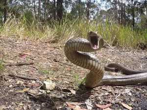 Snake bites spike in venomous start to Easter weekend