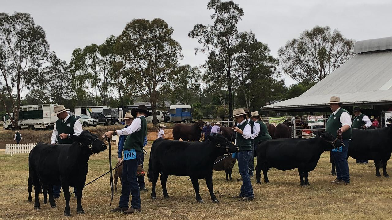 Dexter Cattle will be taking centre stage at the Nanango Show on April 10, 2021.