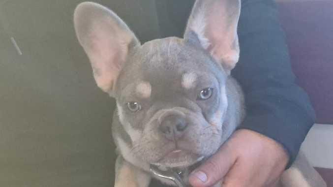 $2500 reward offered for stolen puppy's return