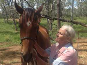 CQ thoroughbred breeder gearing up for big sale