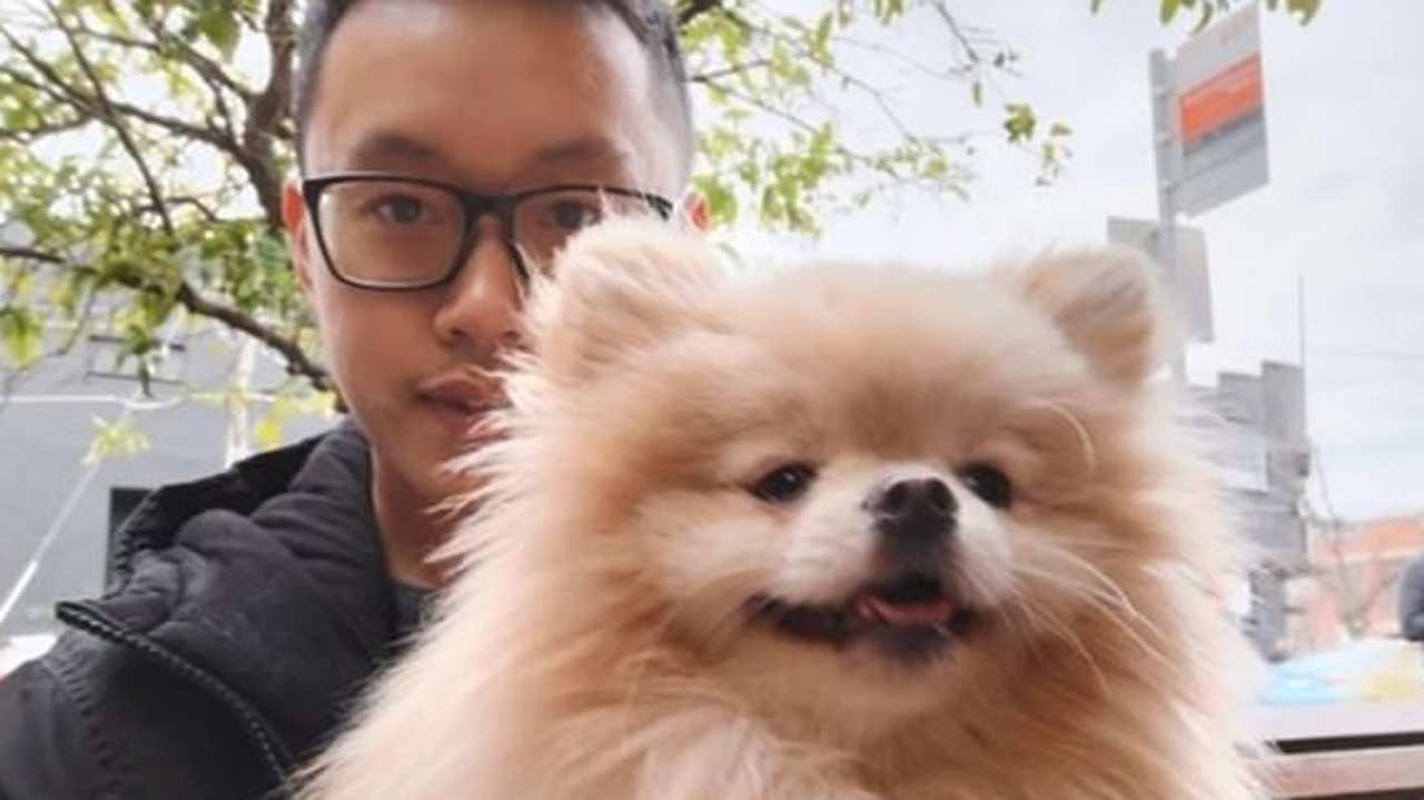 A bitter custody fight over an expensive pomeranian has played out in court as the exes lawyered up to fight for the dog.