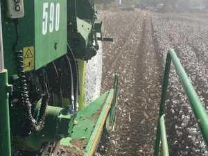 Cotton picking in Toogoolawah