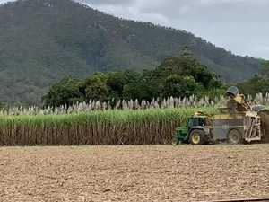 UNDER WAY: Cane harvesting is now happening across the Pioneer Valley