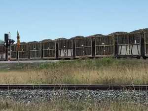 Sugar cane on its way to Marian Mill during crushing season