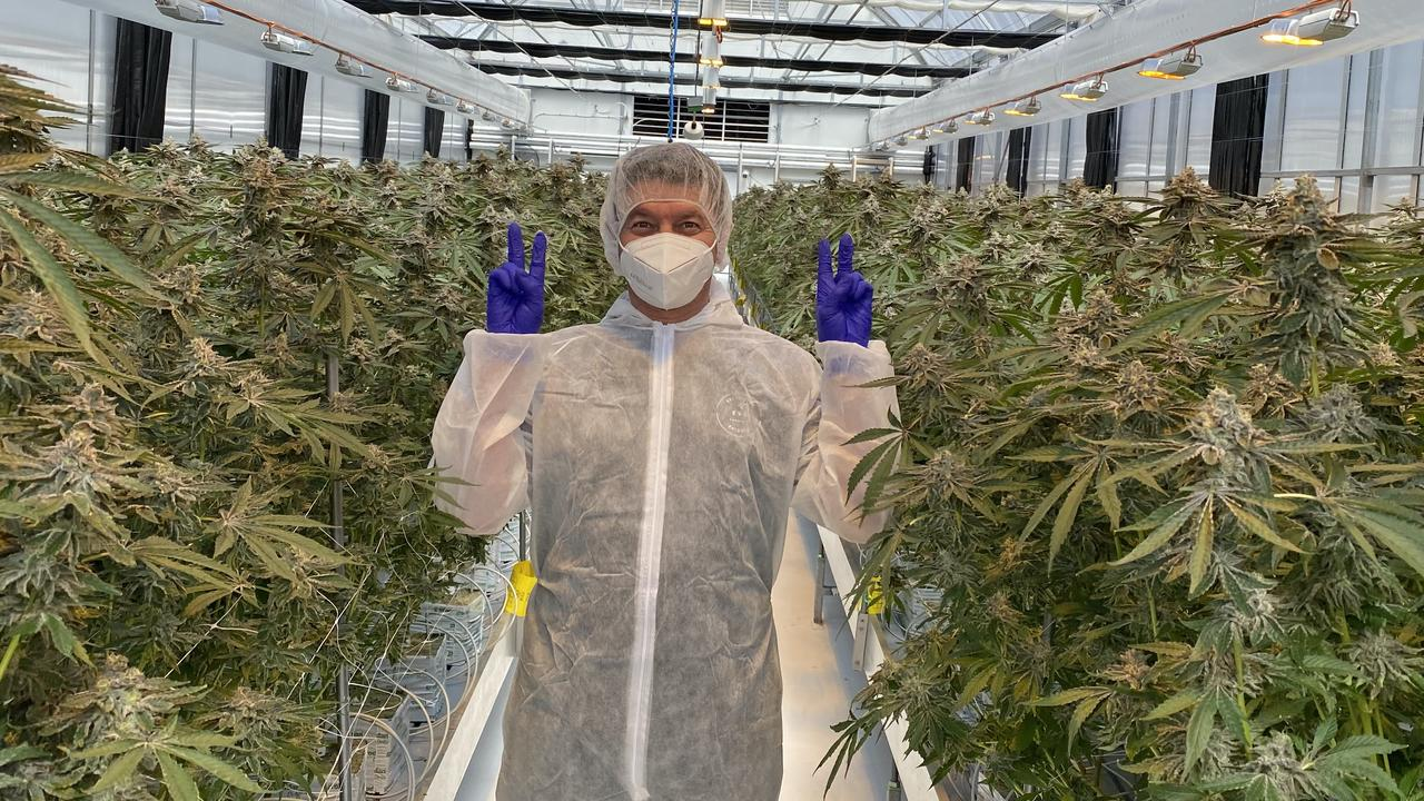 Matt Cantelo in the cannabis greenhouse.
