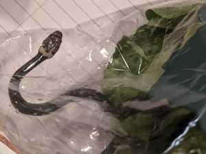 'Dangerous' find in bag of Aldi lettuce