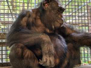 Beloved Rocky Zoo animal almost ready to give birth