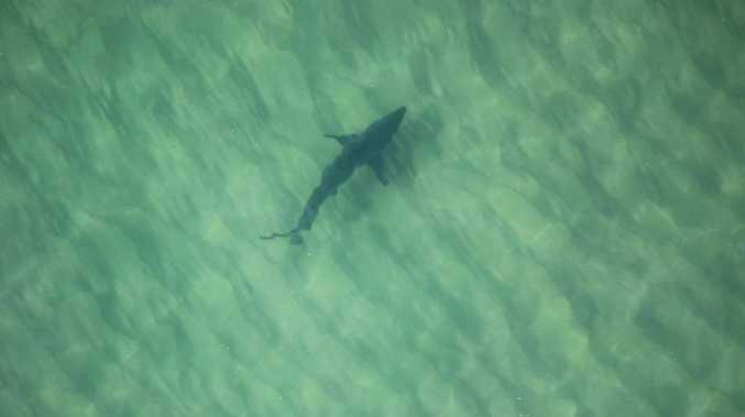 Shark strategy deadline looms, council pleads for funding