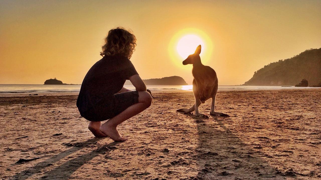 A wallaby at Cape Hillsborough at sunrise. Picture: Aleney de Winter, @boyeatsworld