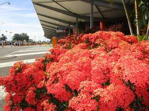 GARDENING: Meet the colourful shrubs in bloom across CQ