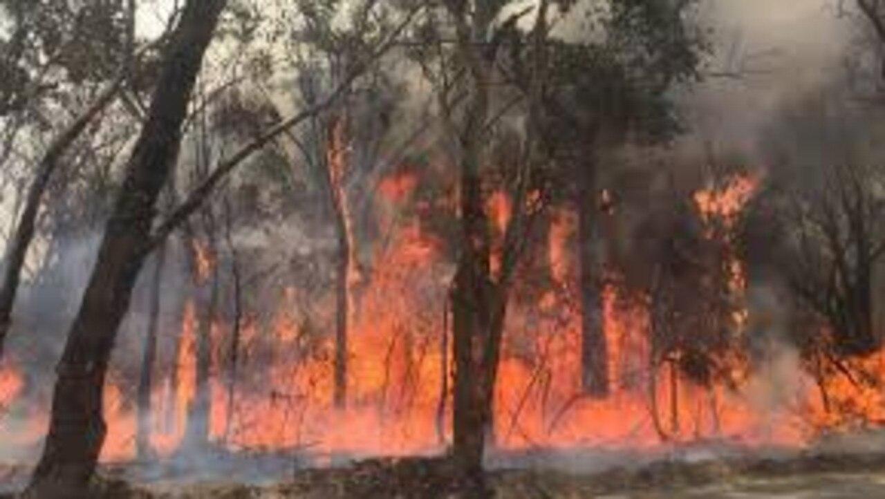 Fire rips through native bushland.