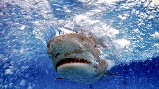 Reports of 3m tiger shark off popular North Coast beach