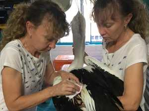 $20K donations fly in for Twinnies seabird rescues