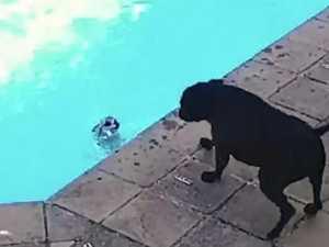 'Heart-wrenching' dog rescue melts internet