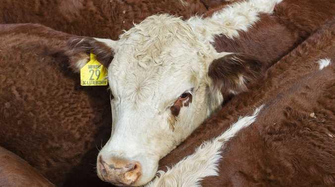 Beef Australia seminar's focus on sustainability in industry