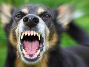 Dog attack lands meter reader in hospital